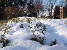 せせらぎ雪①.JPG